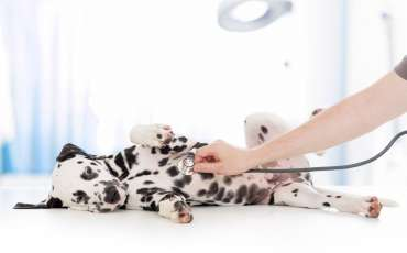 Keep Vet Bills Low with Pet Insurance