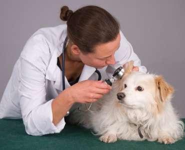 lifescienceaurora.com common pet infections